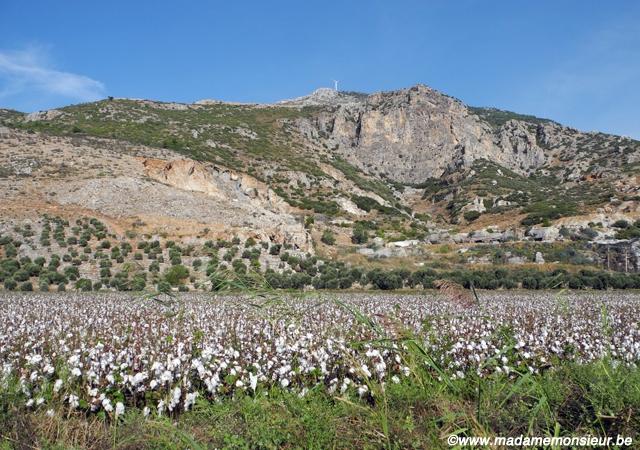 anatolie, turquie, voyage, village, nature, parc national, dilek, oiseaux, coton