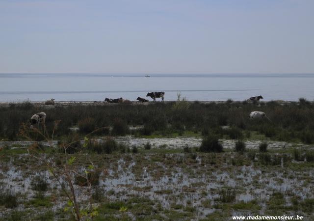 anatolie, turquie, voyage, village, nature, parc national, dilek, oiseaux
