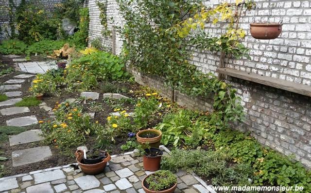 légume,végétal,végétarien,vin,vin bio,vin nature,table d'hôtes,bruxelles,restaurant,chef,belgique,bio