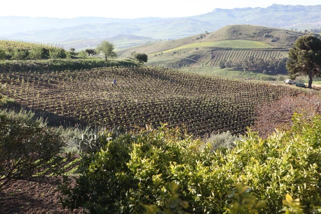 vin, oenotourisme, sicile, coup de coeur, vignoble, bedandbreakfast, maisondhote