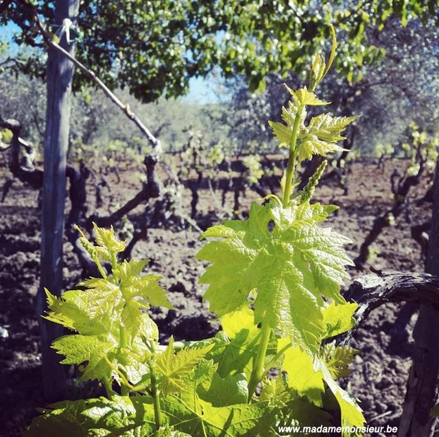 oenotourisme, voyage, vin, oenologie, viticulture, vigneron, sicile, coup de coeur