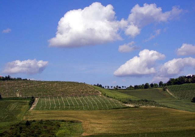 vin,italie,piémont,cépages,indigena,oenoculture,oenophile